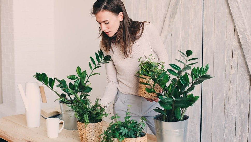 Plants For Allergies